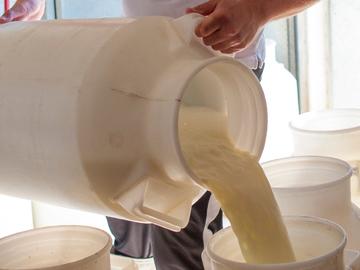 raccolta-latte5